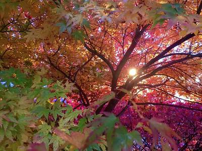 Photograph - Colors Of Joy by Karen Horn