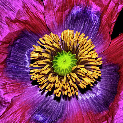 Photograph - Colors Of Nature - Poppy Center 002 by George Bostian