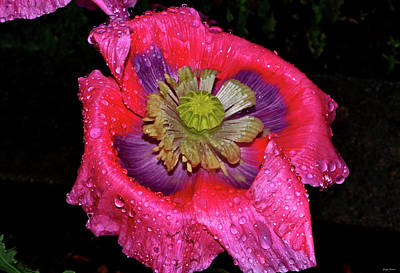 Photograph - Colors Of Nature - Poppy With Raindrops 003 by George Bostian