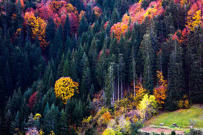 Autumn Landscape Photograph - Colors Of Rhodope by Evgeni Dinev