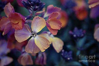 Photograph - Colors Of Spring by Eva Lechner