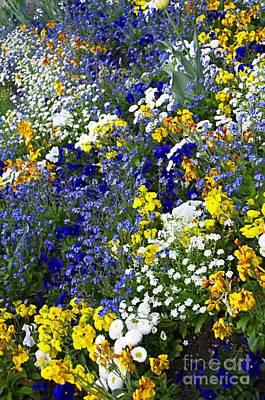 Colors Of Spring Flowers Original