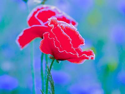 Beagle Puppies Painting - Colors Of Spring - Poppies 4 by Celestial Images