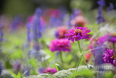 Photograph - Colors Of Summer by Eva Lechner