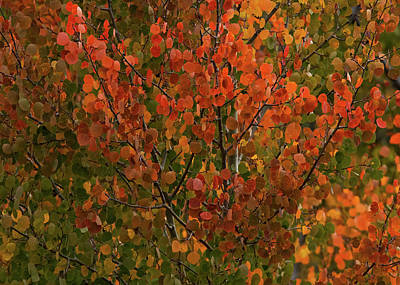 Photograph - Colors Of The Aspen by Ernie Echols