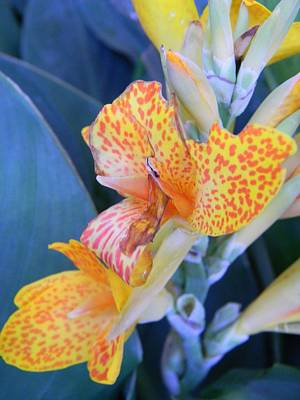 Colors Of The Canna Lily Print by Warren Thompson