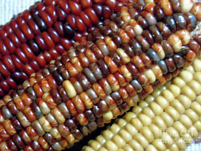 Photograph - Colors Of The Corn by D Hackett