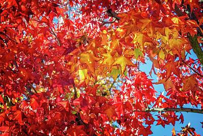 Photograph - Colors Of The Season by Lynn Bauer