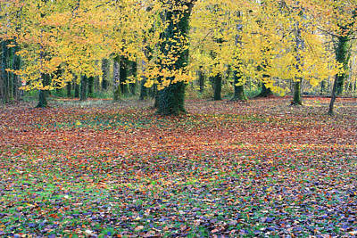 Photograph - Colors Of The Seasonal Autumn Tree by Pierre Leclerc Photography