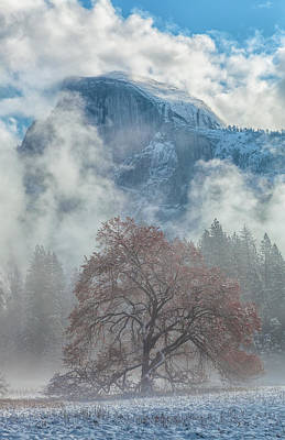 Photograph - Colors Of The Winter 4 by Jonathan Nguyen