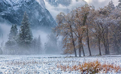 Photograph - Colors Of The Winter 5 by Jonathan Nguyen
