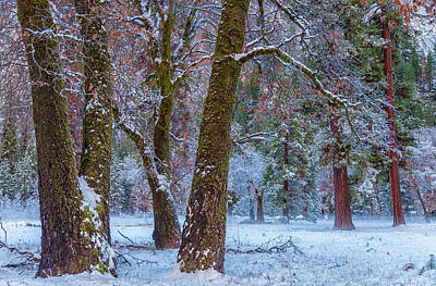 Photograph - Colors Of The Winter by Jonathan Nguyen
