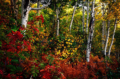 Photograph - Colors On Mcclure Pass by Ken Smith