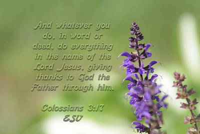 Photograph - Colossians 3 Verse 17 by Alan Skonieczny