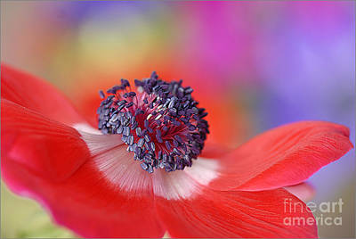 Colour My World Art Print by Jacky Parker