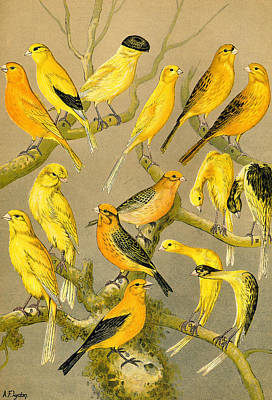 Colour Plate From The Boy's Own Paper, 1891 Art Print by FL collection