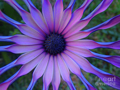 Photograph - Colour Purple by Trena Mara