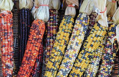 Photograph - Coloured Corn by Nina Silver