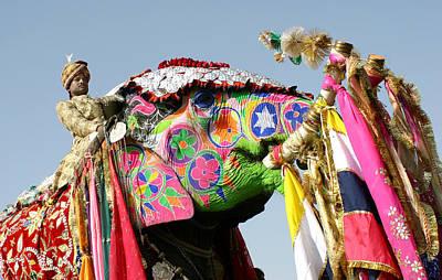 Colourful Elephants At Elephant Festival Art Print by John Sones