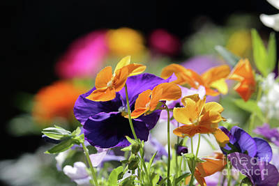 Photograph - Colourful Flowers by Julia Gavin