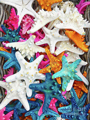 Photograph - Colourful Starfish Background by Tom Gowanlock