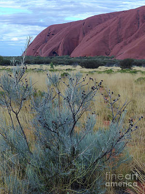 Photograph - Colours And Contours - Uluru by Phil Banks