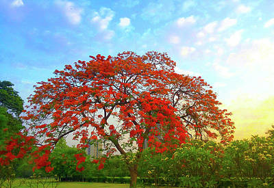 Photograph - Colours - Gulmohar Tree  by Atullya N Srivastava