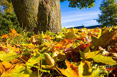 Photograph - Colours Of Autumn by Ismo Raisanen
