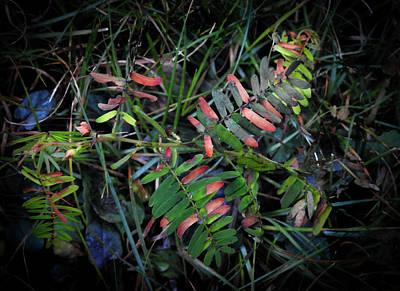 Photograph - Colours Of Nature by Douglas Barnett