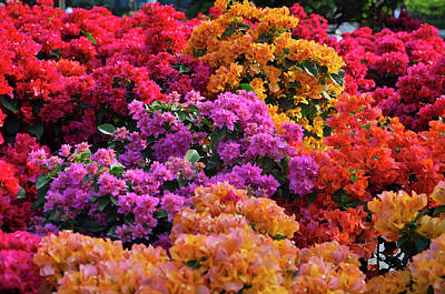 Miss. Saigon Photograph - Colours Of Spring. by Nhi Ho Thi Xuan