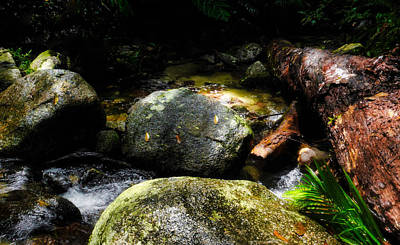 Photograph - Colours Of The Rainforest - Mossman Gorge, Far North Queensland, Australia by Lexa Harpell