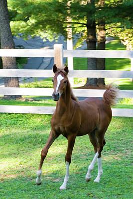 Horses Photograph - Colt by Michael Barry