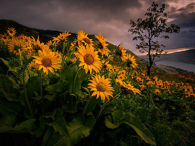 Photograph - Columbia Gorge Joy by Dan Mihai