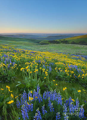 Photograph - Columbia Hills Wildflower Dawn by Mike Dawson