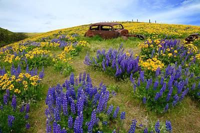 Columbia Hills Wildflowers Art Print