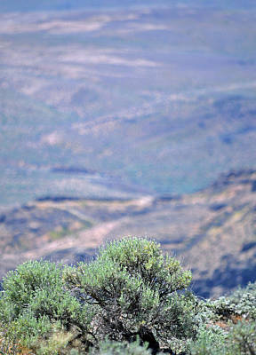 Photograph - Columbia River Scenic View  by Carol Eliassen