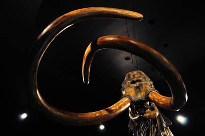 Columbian Mammoth La Brea Tar Pits Art Print