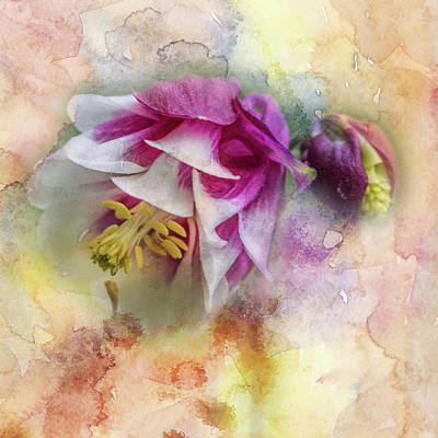 Columbine Blossom In Magenta And White #1 Art Print by Mother Nature