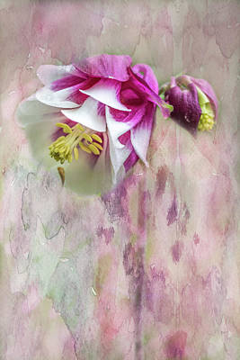 Columbine Blossom In Magenta And White Art Print by Mother Nature