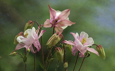 Photograph - Columbine Bouquet by Angie Vogel