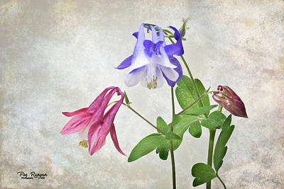 Photograph - Columbine Collection by Peg Runyan