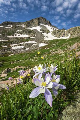 Photograph - Columbine Flowers by Whit Richardson