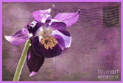 Photograph - Columbine On Vintage 1909 Postcard by Nina Silver