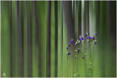 Photograph - Columbine Spring by Wayne King