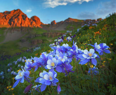 San Juan Mountains Photograph - Columbine Sunrise by Darren White