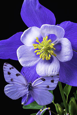 Columbine With Butterfly Art Print