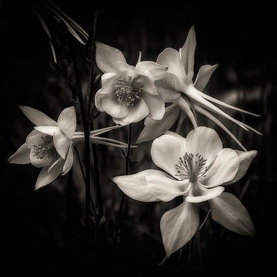 Digital Art - Columbines Bw by Ernie Echols