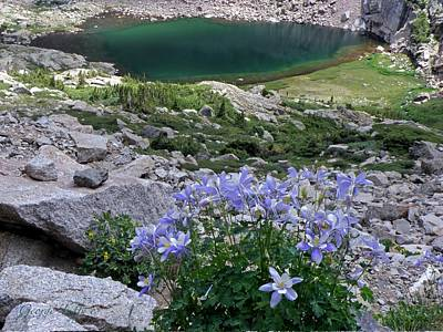 Chasm Lake Photograph - Columbines  by George Tuffy