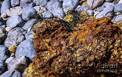 Photograph - Coloured Rocks Of Trial Harbour  #5 by Lexa Harpell