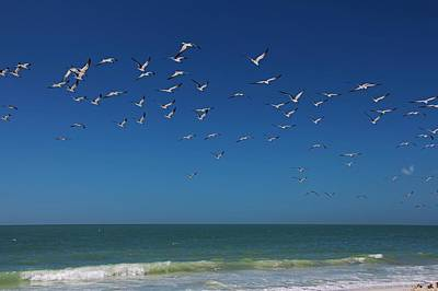 Photograph - Come Fly With Me by Michiale Schneider